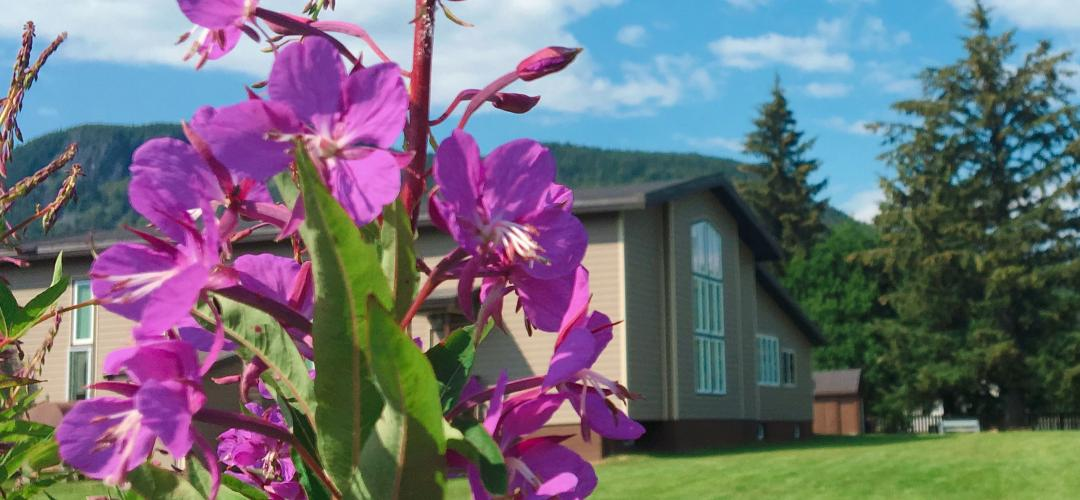 fireweed in July